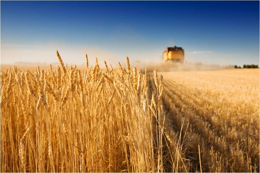 farm - harvet